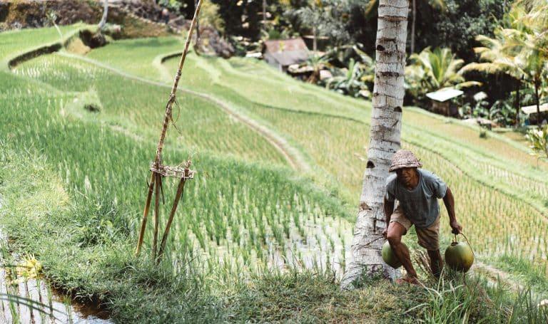 Farmer in Southeast Asia